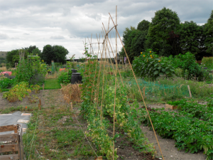 Allotments small